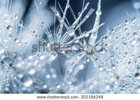 Macro closeup of frozen flower - stock photo