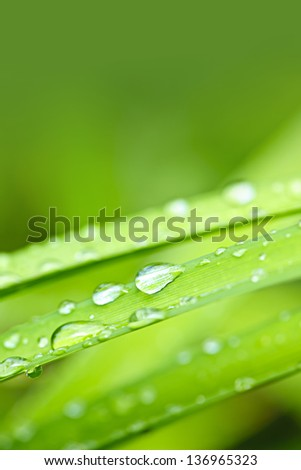 Macro closeup of water drops on grass blades with green copy space