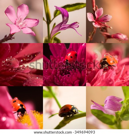 Macro Collage of flowers and ladybird