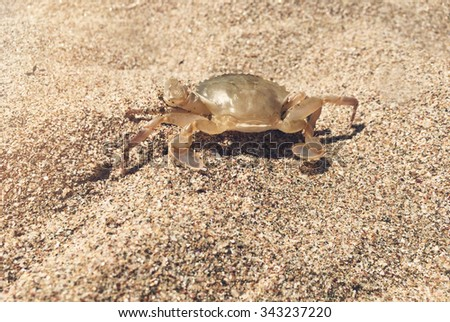 Macro crab on the sand
