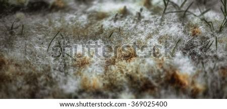 Macro dandelion fluff - stock photo