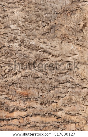 macro detail of an original tree bark with great structural effect