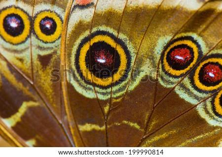 Macro detail of blue morpho ( morpho peleides) butterfly wing, bottom view - stock photo