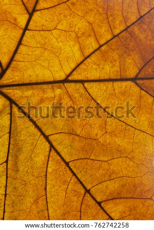 Macro detail of dry autumn leaf