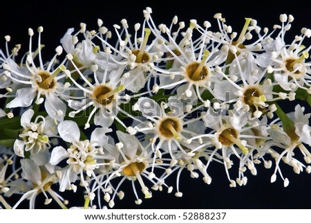 Macro detail of small white flowers - stock photo