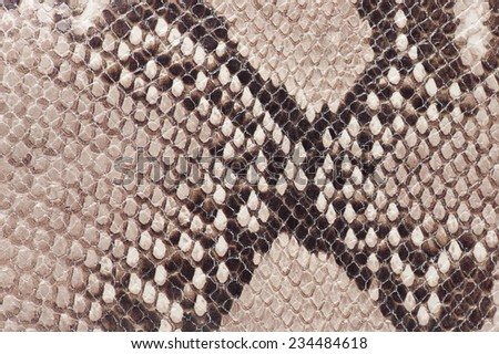 macro detail of snake brown leather - stock photo