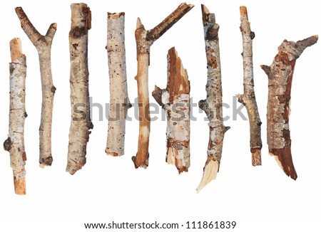 macro dry  branches of birch  isolated on white background