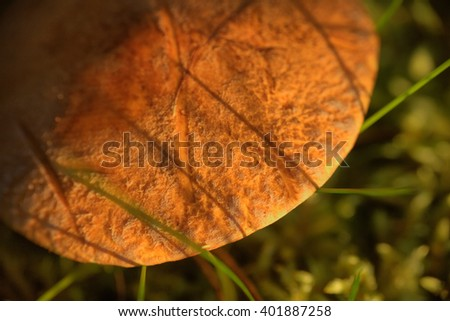 macro edible mushroom forest - stock photo