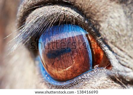Macro eye of black horse - stock photo