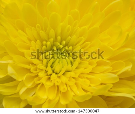 macro flower in yellow