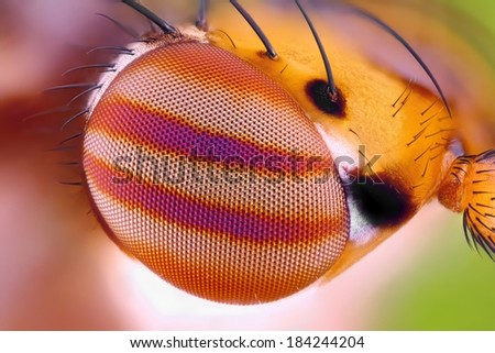 Macro fly compound eye surface at extreme magnification. Very sharp  - stock photo