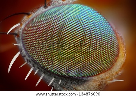 Macro fly compound eye surface at extreme x25 magnification. Very sharp - stock photo