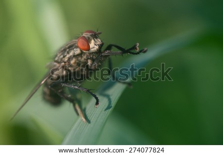 macro fly portrait - stock photo