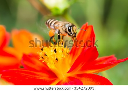 macro fullcolor of flower with bee
