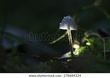 macro fungus mushroom naturally in wood - stock photo