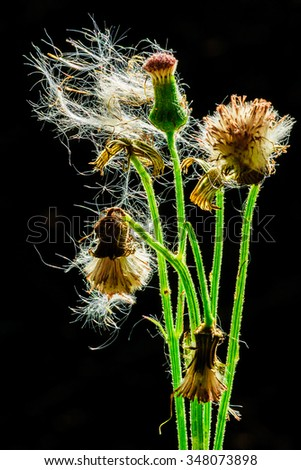 Macro grass in the beautiful water droplets. - stock photo