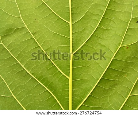 Macro green leaf for Texture or background - stock photo