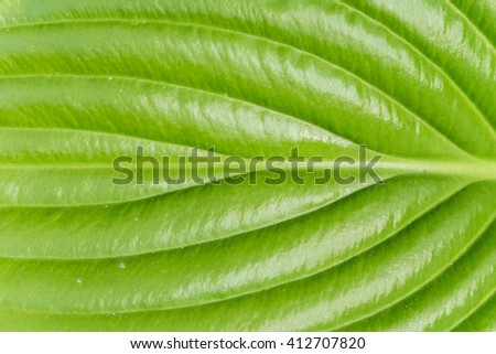 Macro green leave background closeup. - stock photo