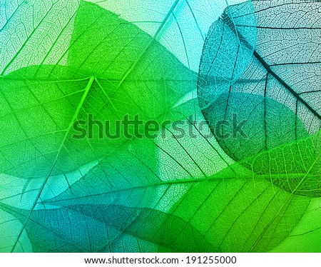 Macro green leaves background texture - stock photo