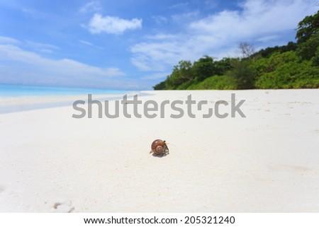 Macro hermit crab on the beach - stock photo