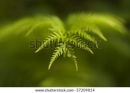Macro image of a leaf with a blurred background - stock photo