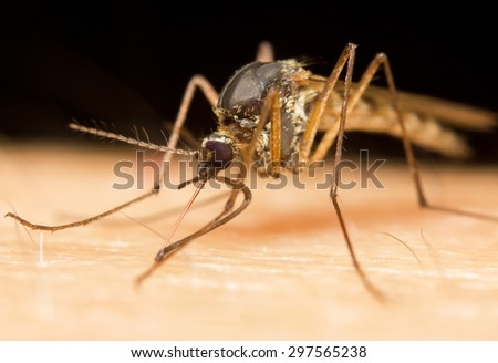 Macro-image of a mosquito on a human hand sucking blood - stock photo
