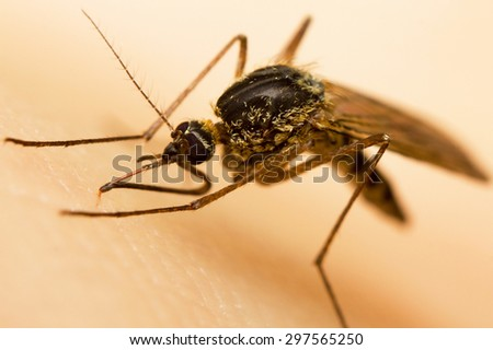 Macro-image of a mosquito on a human hand sucking blood