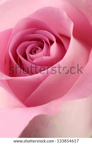 Macro image of a pink rose