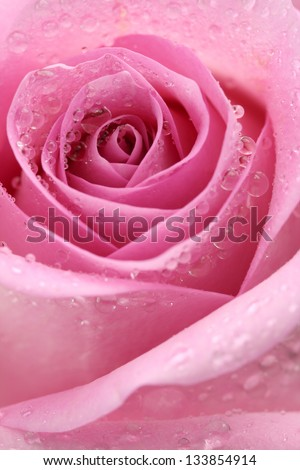 Macro image of a pink rose with droplets - stock photo