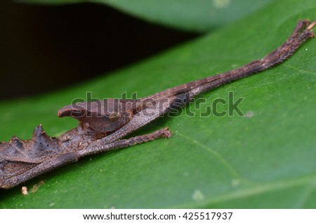Macro image of a stick insect