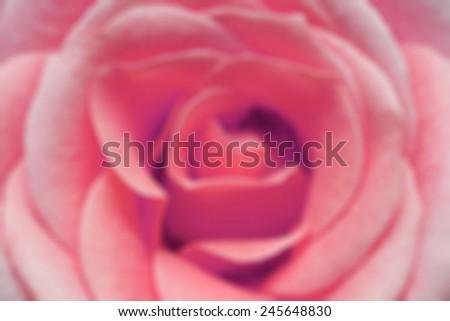 macro image of blurred pink rose - stock photo