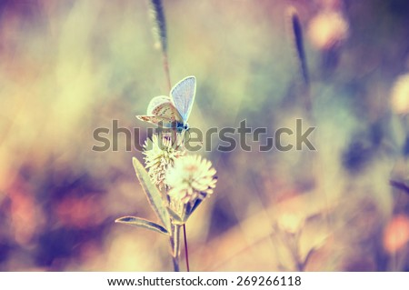Macro image of butterfly, small depth of field. Creative vintage filter, retro effect - stock photo