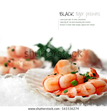 Macro image of fresh Black Tiger Prawns in scallop shells placed on white snow. The perfect image for a fish restaurant or dinner menu cover. Copy space. - stock photo
