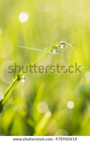 macro image of green grass background with water drops hanging on the leaves being backlit by the sun in the morning