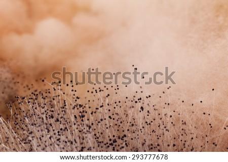 Macro image of mold. - stock photo