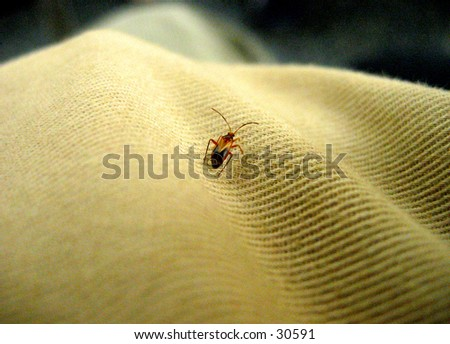 Macro image on a tinny bug on fabric - stock photo