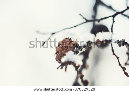 Macro image on the fir cone, small depth of field. Beautiful winter nature. Vintage filter - stock photo