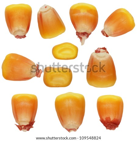 Macro kernel corn isolated on white background - stock photo
