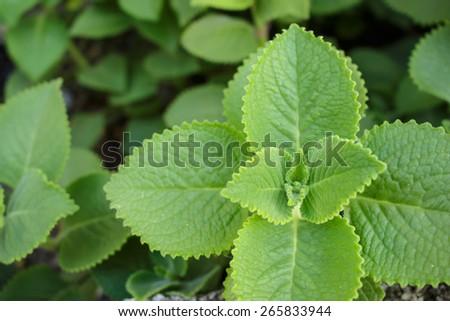 macro leaf green fur pattern - stock photo