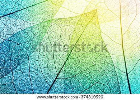 Macro leaves background texture. - stock photo