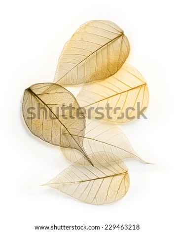 Macro  leaves texture background. Foliage decoration pattern. - stock photo