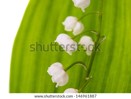 macro lily of the valley