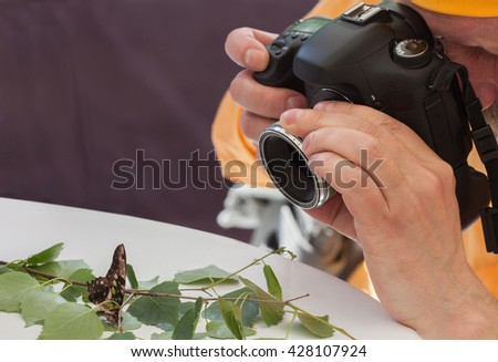 macro live butterfly on the table - stock photo