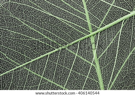 macro of a delicate leaf cell structure - stock photo