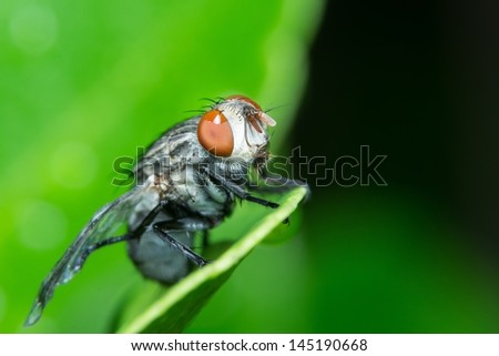 Macro of a fly sitting on a green leaf