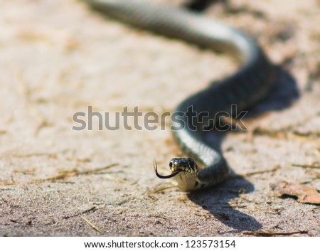macro of a grass snake in the nature - stock photo