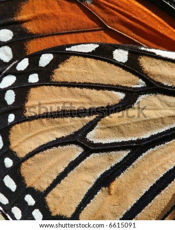 Macro of a Monarch Butterfly for background or texture - stock photo