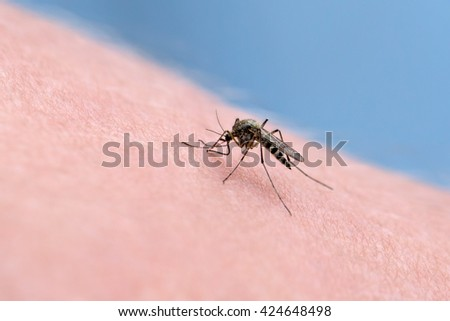 Macro of a mosquito on a human  leather sucking blood.  - stock photo