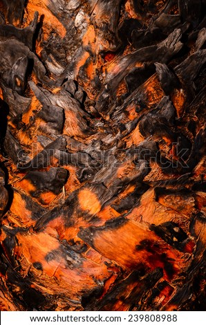 Macro of a Palm Tree Trunk Texture Background - stock photo