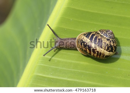 macro of a snail in a frond of palm